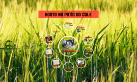 Horto no patio do cole