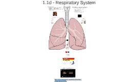 1.1d - Respiratory System