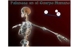Copy of Palancas en el cuerpo humano