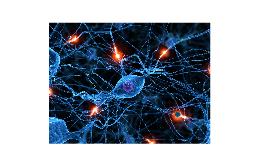 Neuronas y la glia