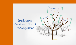Producers & Consumers