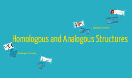 Homologous and Analogous Structures