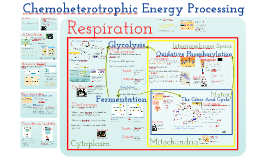 Metabolism: Cellular Respiration