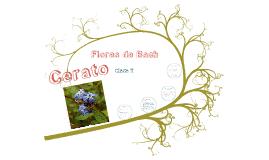 Copy of CERATO