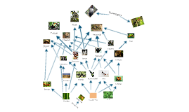 Copy of Tropical Rainforest Food Web