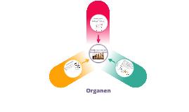 Homologe, analoge en rudimentaire organen