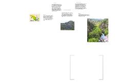 Copy of ecosistemas o biomas de jalisco