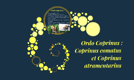 Coprinus comatus vs. Coprinus