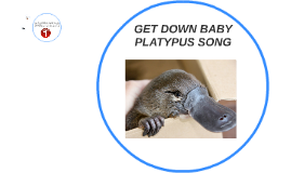 Get down baby platypus song