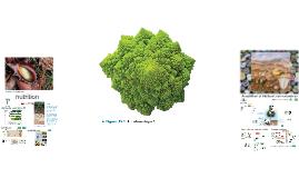 101-gcb Transport et nutrition chez les végétaux