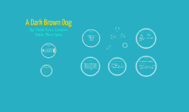 A Dark Brown Dog