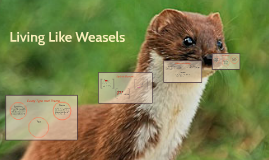 living like weasels by melissa ramos on prezi