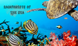 Rainforests of the sea