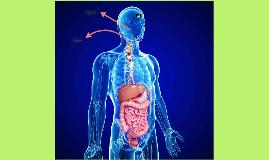 NUTRICIÓN - CULTURA FISICA