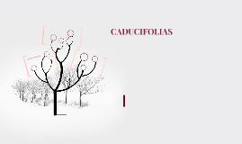 CADUCIFOLIAS