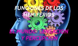 FUNCIONES DE LOS HEMIFERIOS